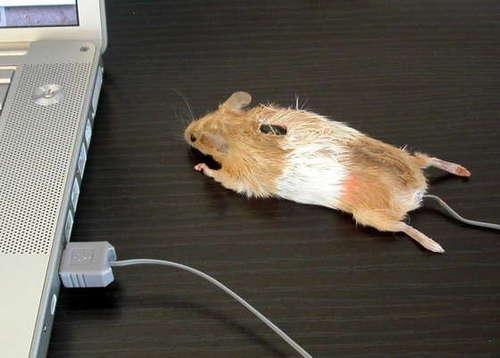 070428_mouse.jpg